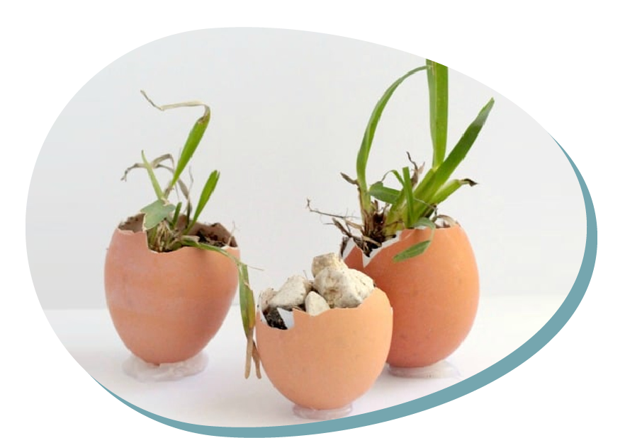 Una planta en una closca d'ou